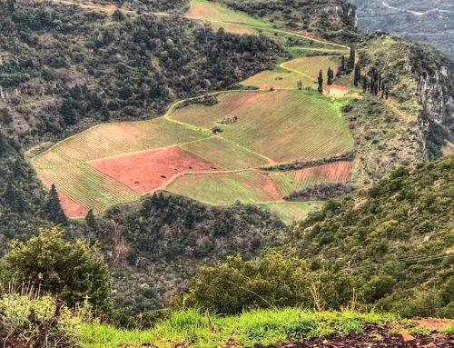 Demetri explores the Peloponnese Part 2: Mavrodaphne and friends