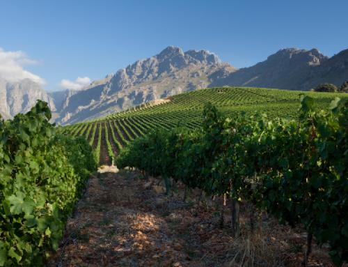 Latest release wines from Oldenburg Vineyards, Stellenbosch, South Africa